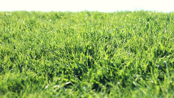 Gras - Kunstzinnig Gezond - Beeldende therapie Utrecht - Sanne Driessen